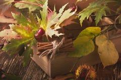 Decoración del otoño con las castañas, las nueces, el canela, y el otoño le Foto de archivo libre de regalías