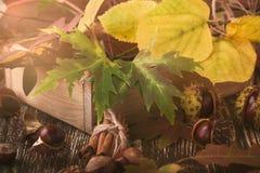 Decoración del otoño con las castañas, las nueces, el canela, y el otoño le Foto de archivo