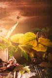 Decoración del otoño con las castañas, las nueces, el canela, y el otoño le Imagen de archivo