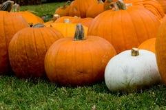 Decoración del otoño - corrección de la calabaza Foto de archivo libre de regalías