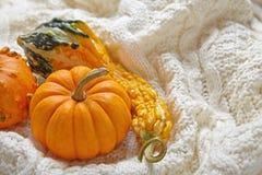 Decoración del otoño de la caída Fotos de archivo libres de regalías