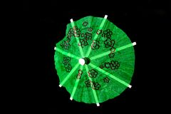 Decoración del paraguas del cóctel del Libro Verde aislada en fondo negro Foto de archivo libre de regalías