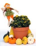 Decoración del tiempo de cosecha Foto de archivo libre de regalías