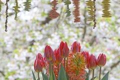 Decoración del tulipán fotografía de archivo libre de regalías