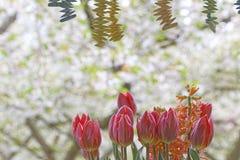 Decoración del tulipán imágenes de archivo libres de regalías
