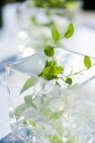Decoración elegante del vector con las hojas en vidrio Fotografía de archivo