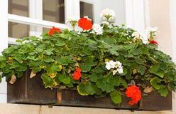 Decoración floral de la ventana Imagen de archivo