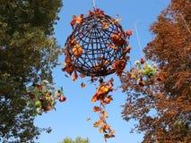 Decoración floral del otoño almacen de video