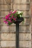 Decoración floral en las calles de Trento Foto de archivo libre de regalías