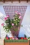 Decoración hermosa de la flor fuera de una casa escocesa Foto de archivo
