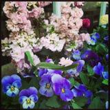 Decoración hermosa de las flores Fotografía de archivo