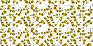 Decoración hermosa del modelo inconsútil amarillo de la flor libre illustration