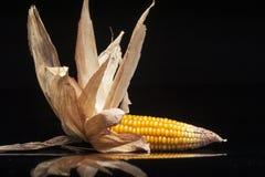 Decoración, maíz, mazorca, amarillo, aún vida, eleganc Fotos de archivo libres de regalías