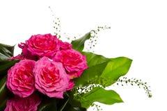 Decoración para la tarjeta de felicitación de las rosas rosadas fotos de archivo libres de regalías
