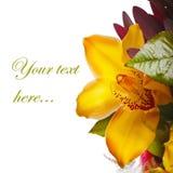Decoración para la tarjeta de felicitación del lirio imagen de archivo libre de regalías