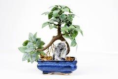 Decoración plástica de los bonsais en el fondo blanco Fotos de archivo libres de regalías
