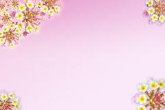 Decoración rosada Fotografía de archivo