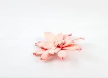 Decoración secada de la flor Fotos de archivo