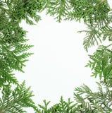 Decoración siempre verde del árbol de abeto para la tarjeta de Navidad aislada, modelo del Año Nuevo, blanco del copyspace Foto de archivo