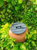 Decoración tropical del jardín Imagen de archivo libre de regalías