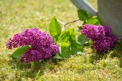 Decoración violeta de la lila Foto de archivo libre de regalías