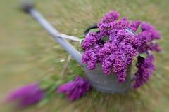 Decoración violeta de la lila Imágenes de archivo libres de regalías