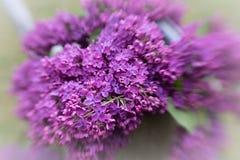 Decoración violeta de la lila Fotografía de archivo libre de regalías
