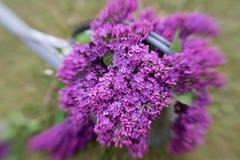 Decoración violeta de la lila Fotos de archivo libres de regalías