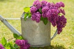 Decoración violeta de la lila en una poder del agua Imagenes de archivo