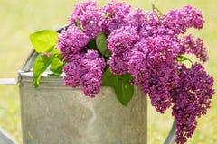 Decoración violeta de la lila en una poder del agua Fotografía de archivo libre de regalías