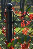 Decoración 8 de la hiedra Foto de archivo