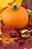 Decoración de la calabaza con las hojas de otoño para el día de la acción de gracias Fotografía de archivo