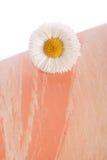 Decoración de la flor de la margarita Foto de archivo