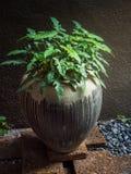 Decoración tropical del jardín Fotografía de archivo libre de regalías
