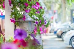 Decoraciones de la boda Flores brillantes delicadas en un pote en una cerca en un café del verano en la calle Foto de archivo libre de regalías