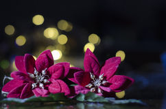 Decoraciones de la Navidad - hollies Imagen de archivo