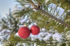 Decoraciones del árbol de navidad, ejecución de la bola de dos rojos en un branc del pino Foto de archivo