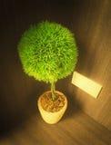 Decoraciones del árbol en la luz de la mañana Fotografía de archivo libre de regalías