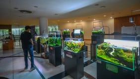 Decoraciones del acuario en venta en Bangkok, Tailandia imagen de archivo