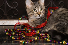 Decoraciones del gatito y del día de fiesta Imagenes de archivo