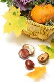 Decoraciones del otoño Fotografía de archivo libre de regalías