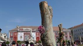 Decoraciones florales hermosas en viejo Liberty Square, Timisoara, Rumania metrajes