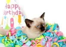 Decoraciones lindas del gatito y de la fiesta de cumpleaños Imagen de archivo libre de regalías