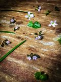 Decoraciones lindas y pequeñas de la flor en la tabla de madera Fotos de archivo