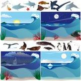Decorados y animales del mar Fotografía de archivo libre de regalías