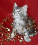 Decorações do gatinho e do Natal Fotos de Stock Royalty Free