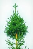 Decorando a árvore de Natal Fotos de Stock
