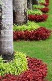 Decorando o jardim da planta Foto de Stock Royalty Free
