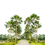 Decorate palm trees on the park isolated Royalty Free Stock Image