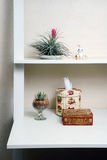 Decorate with some little cactus. Interior decorate with some little cactus on shelf to be closed to nature Royalty Free Stock Photos